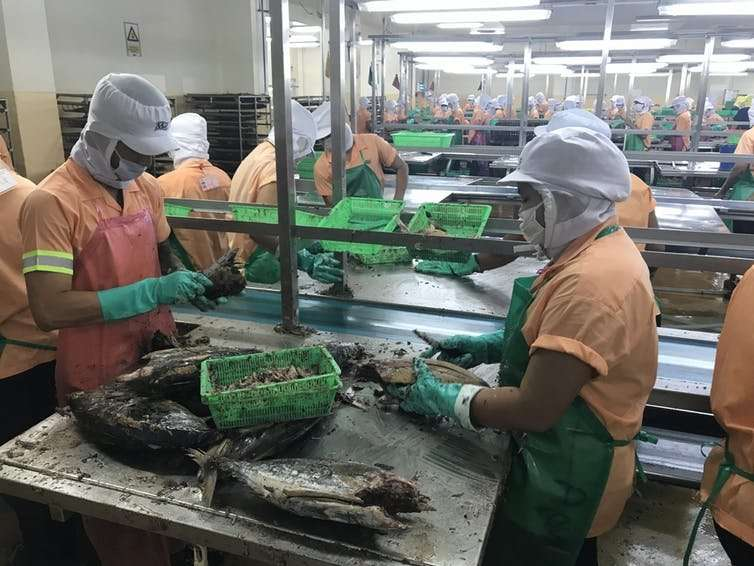 Almost every brand of tuna on supermarket shelves shows why modern slavery laws are needed