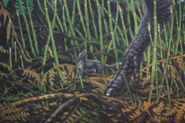 Ancient 'night' marsupial faced four months of winter darkness