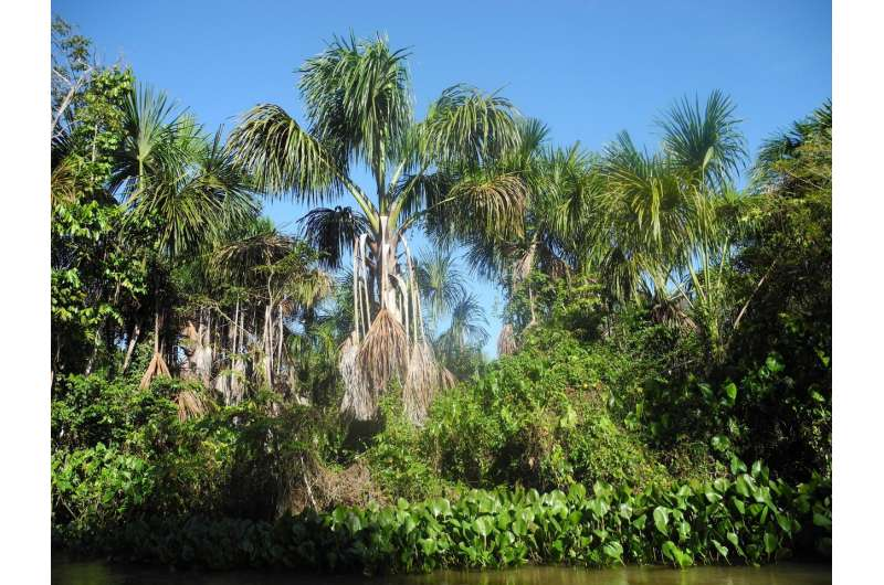 A new study shows the evolution and changes of the vegetation of the Orinoco Delta of the last 6200 years