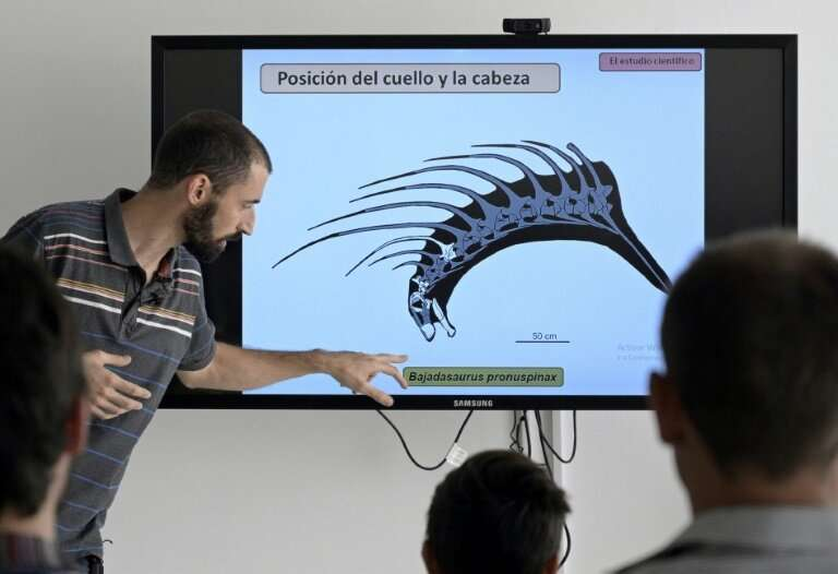 Argentine assistant resaearcher Pablo Gallina says the Bajadasaurus pronuspinax's spines would have had a similar use to the hor