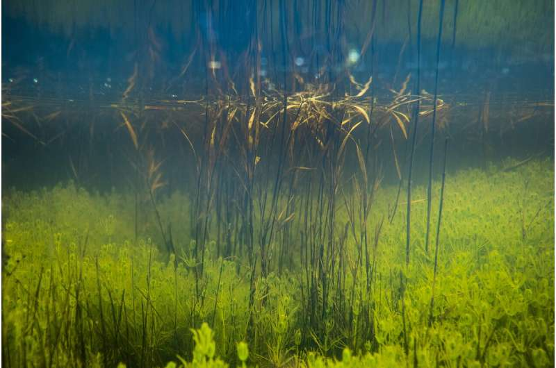 ASU study shows some aquatic plants depend on the landscape for photosynthesis