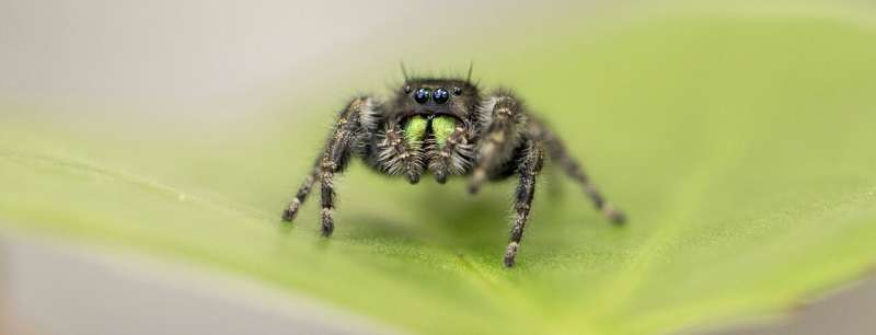 Baby spiders really are watching you