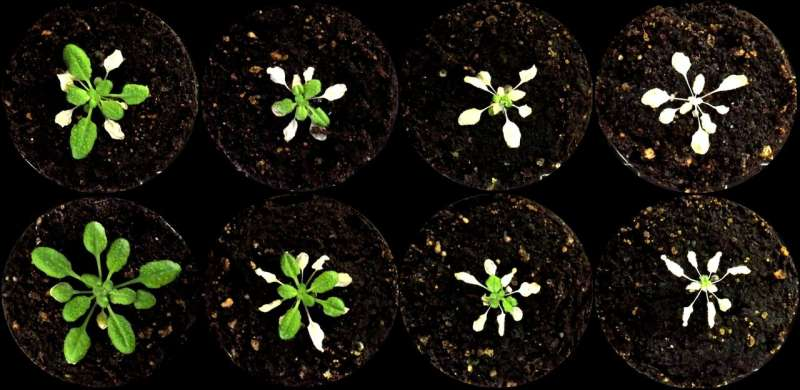 Biologists uncover a way to waterproof plants