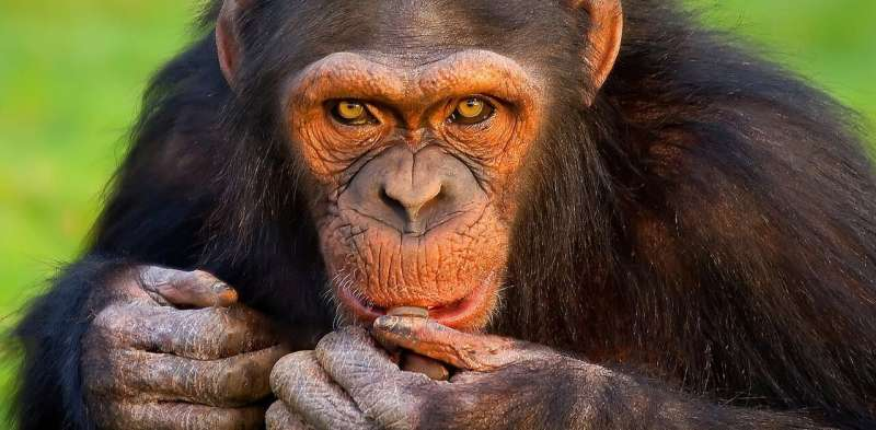Cannibalism is common in the animal kingdom – here's why for humans it's the ultimate taboo