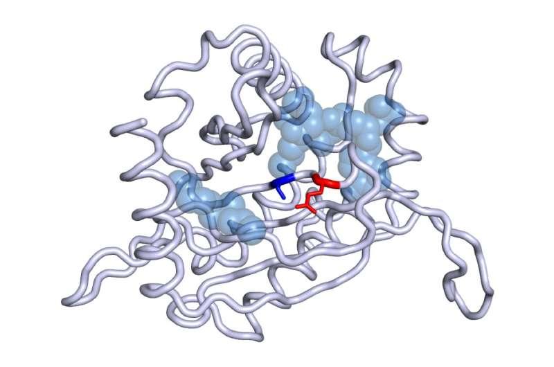 CNIO researchers identify a new gene involved in the development of a rare endocrine tumour