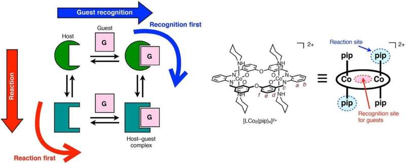 Controlling ion recognition in reactive host-guest systems