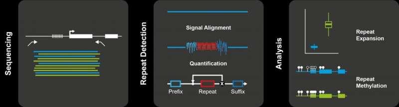 DNA repeats -- the genome's dark matter