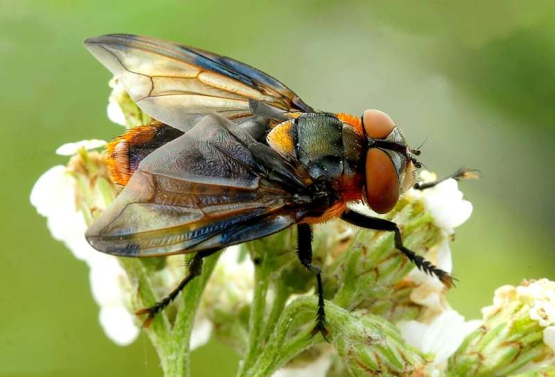 DNA traces on wild flowers reveal insect visitors