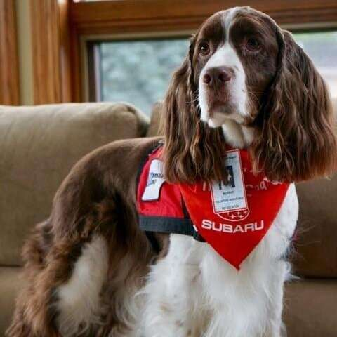 Dogs reduce distress of patients waiting for emergency hospital care