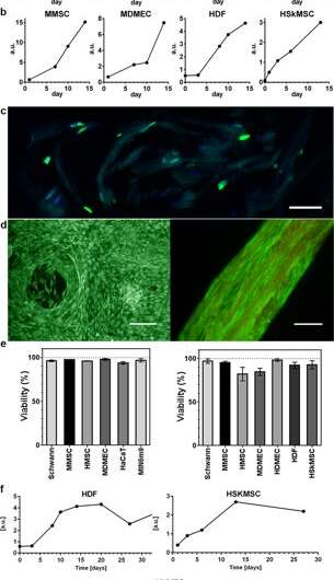 Engineering ECM-like Fibers with Bioactive Silk for 3D Cell Culture