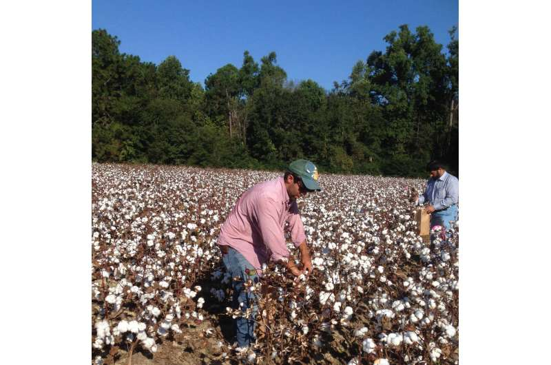 'Exotic' genes may improve cotton yield and quality