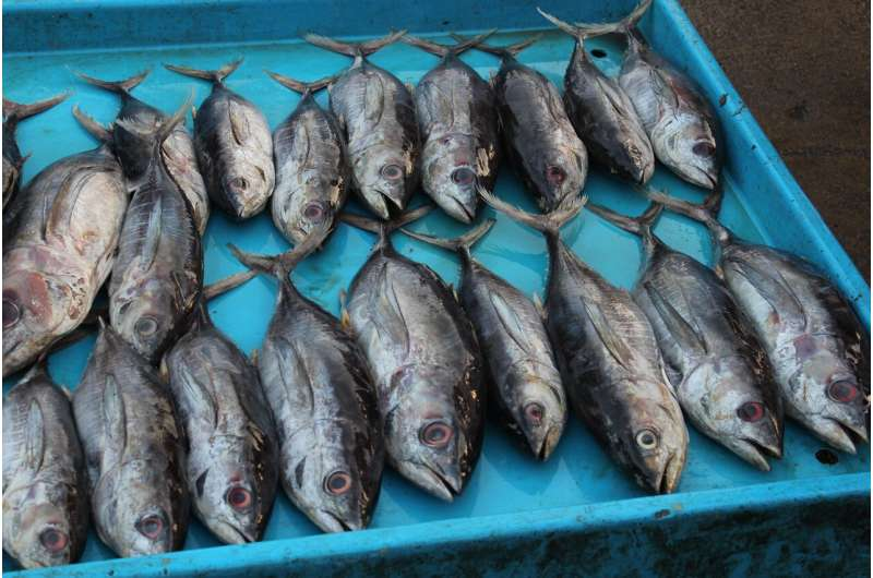 Experts discuss food security from oceans