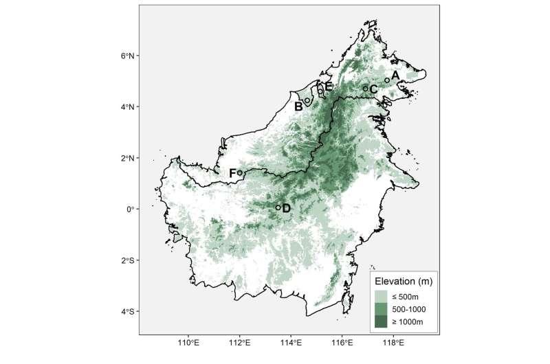 First scientific description of elusive bird illuminates plight of Borneo's forests