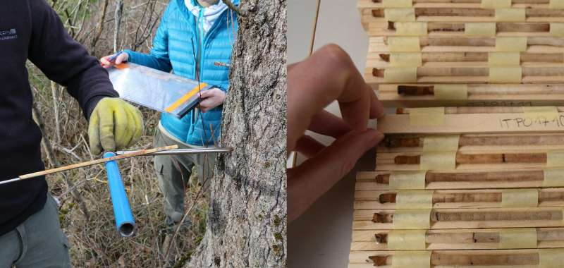 Genetic diversity maps to help forests survive climate change