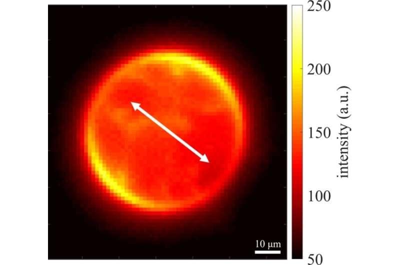 Graphene layer enables advance in super-resolution microscopy
