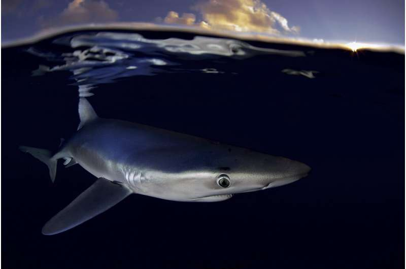 Greenpeace sounds alarm about North Atlantic shark fishing