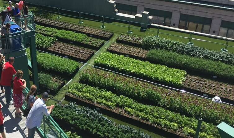 Green roofs improve the urban environment – so why don't all buildings have them?