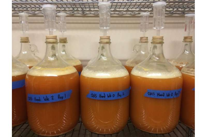 Hand- versus machine-harvested juice and cider apples: A comparison of phenolic profiles