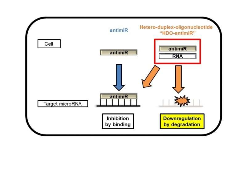 HDO-antimiR represents a new weapon in the fight against microRNA-related disease