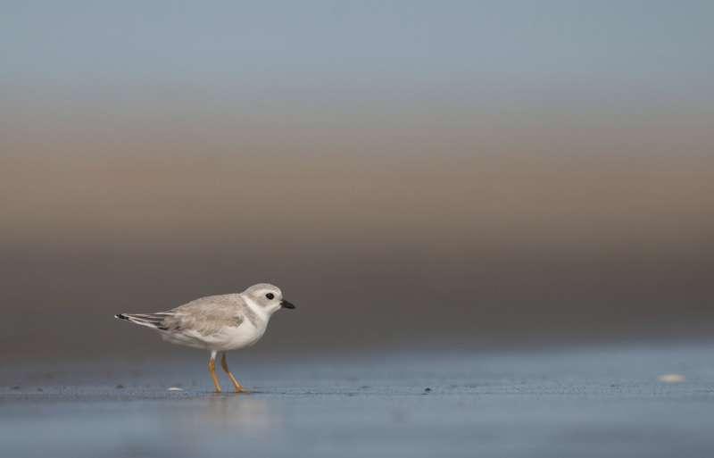 How birdwatchers can help threatened bird populations