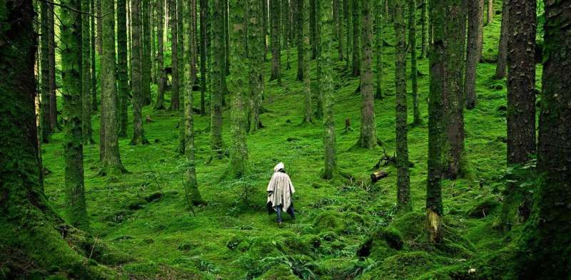 How to design a forest fit to heal the planet