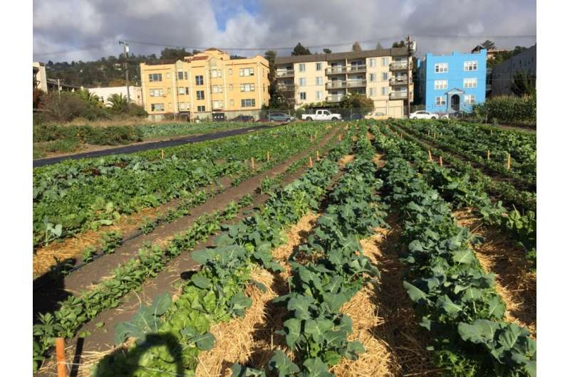How urban agriculture can improve food security in US cities