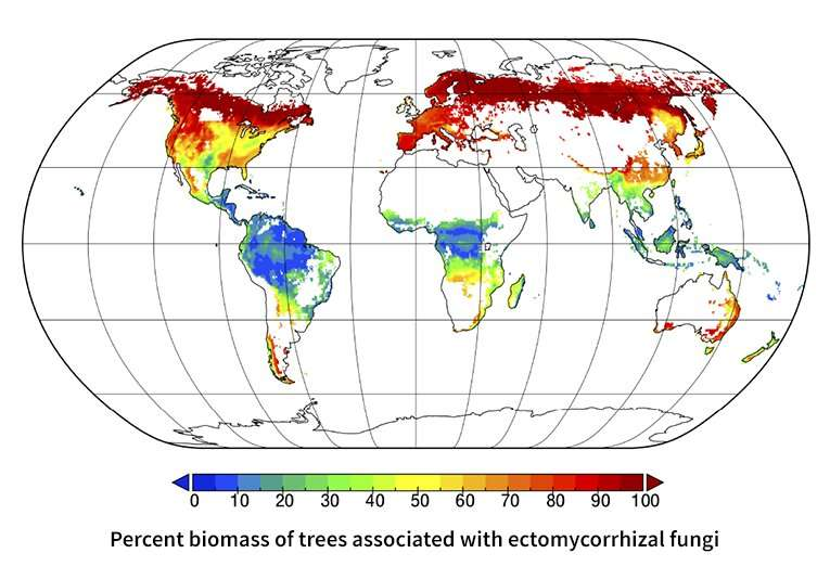 Mapping microbial symbioses in forests