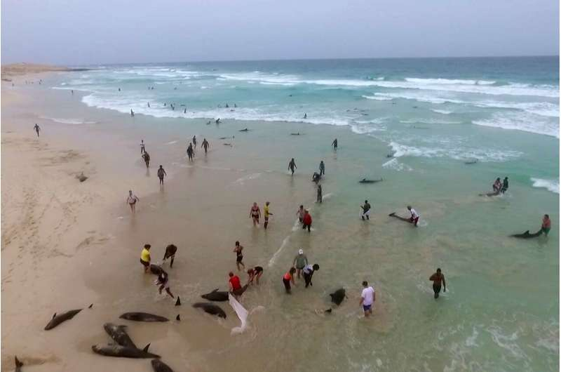 More than 100 dolphins die on island beach off West Africa