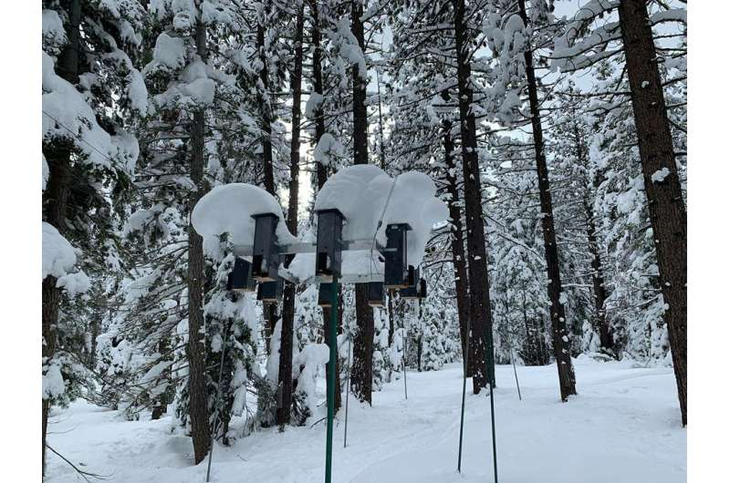 Natural selection and spatial memory link shown in mountain chickadee research