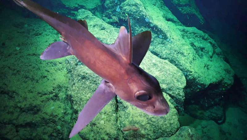 New deep sea animal discoveries warrant expanded protections in Costa Rican waters