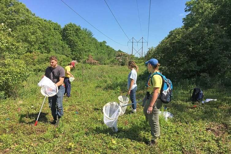 New England power line corridors harbor rare bees and other wild things