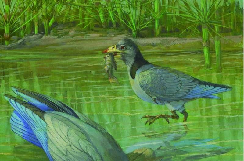 New finding on origin of avian predentary in Mesozoic birds