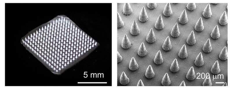 New microneedle technique speeds plant disease detection