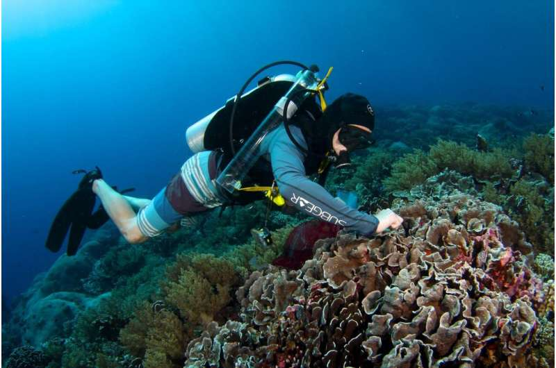 New study measures how much of corals' nutrition comes from hunting