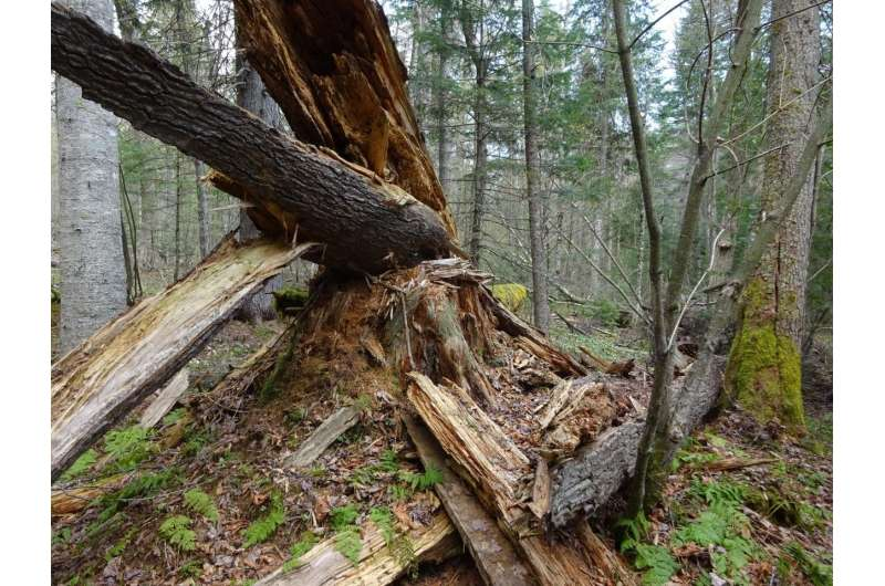 Older forests resist change -- climate change, that is