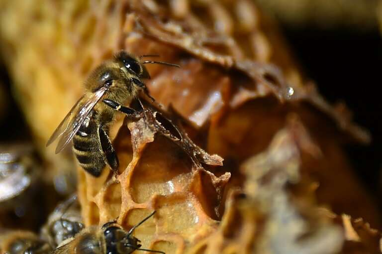 One-in-six species of bees have gone regionally extinct somewhere in the world