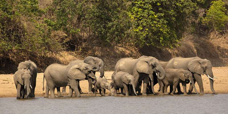 Online tool speeds response to elephant poaching by tracing ivory to source