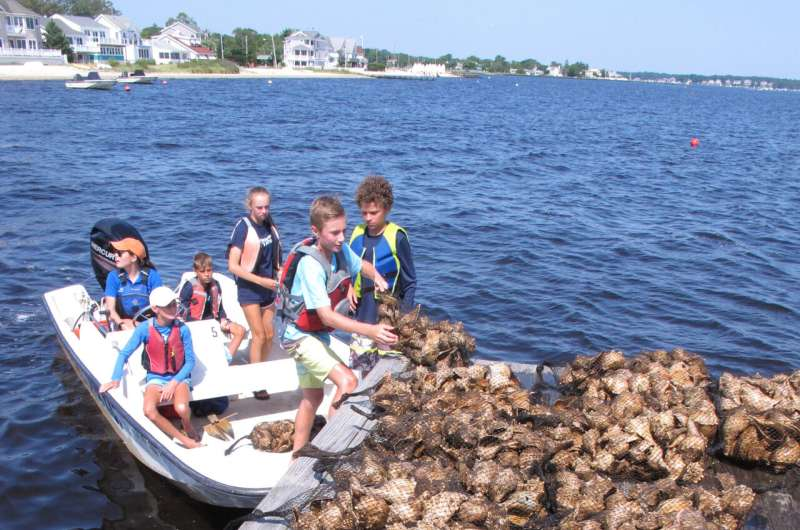 Oyster seeding: A 'tangible, physical' way to help the water