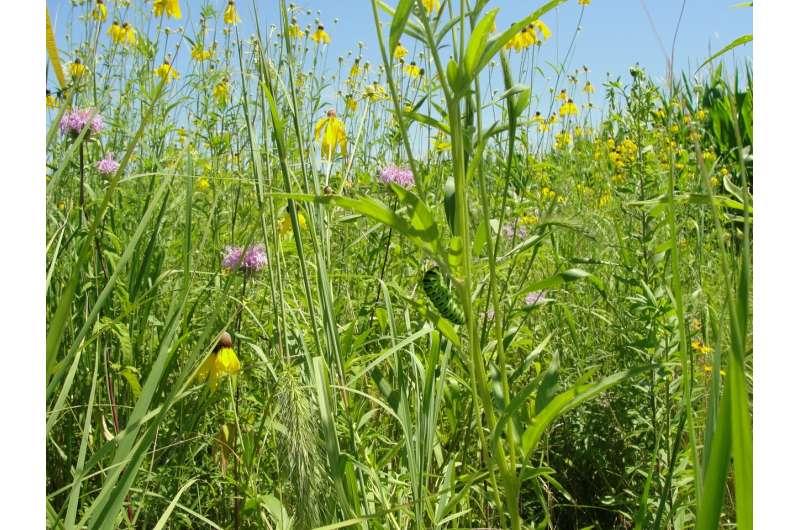Las franjas de pradera transforman la conservación de las tierras agrícolas
