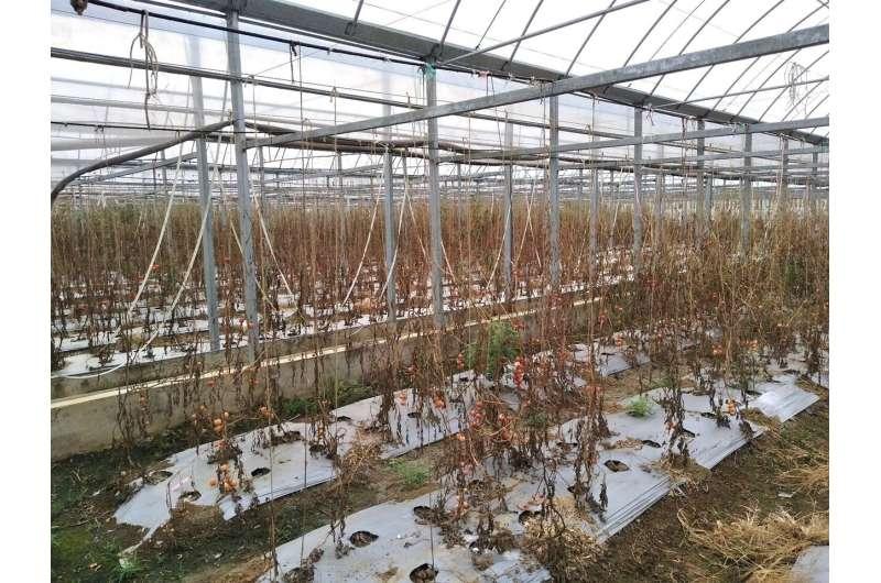 Precision medicine for plants