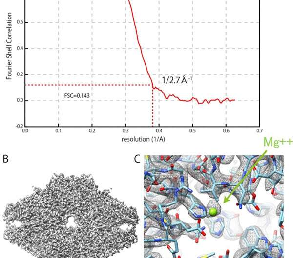 Realization of new IBSA method for 3-D structural analysis of biology