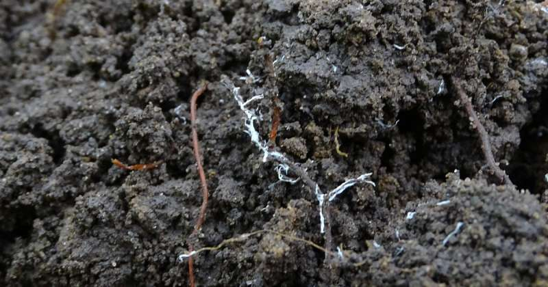 Reduce, reuse, recycle: The future of phosphorus