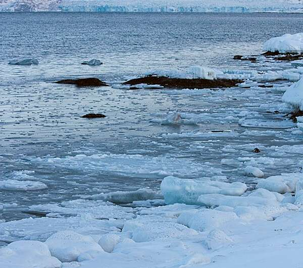 Reindeer adapt to climate change by eating seaweed