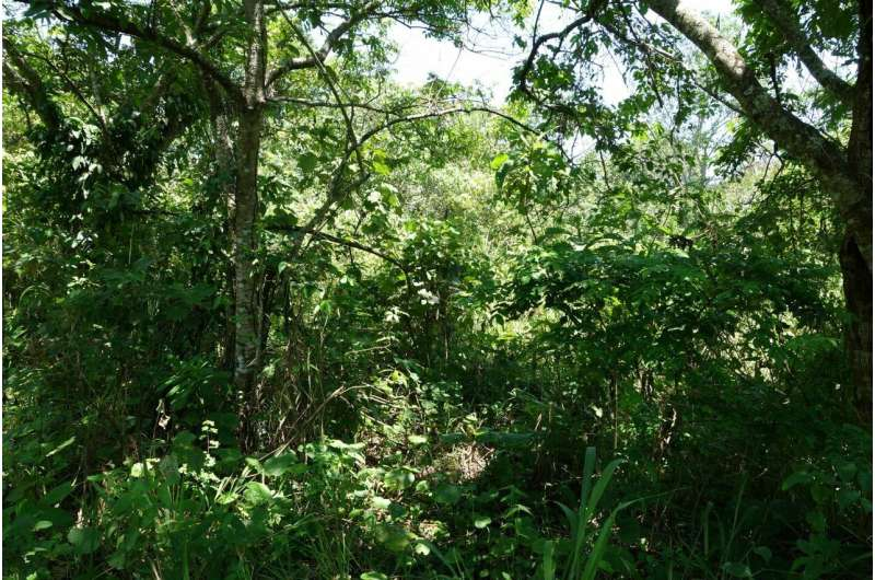 Restore natural forests to meet global climate goals