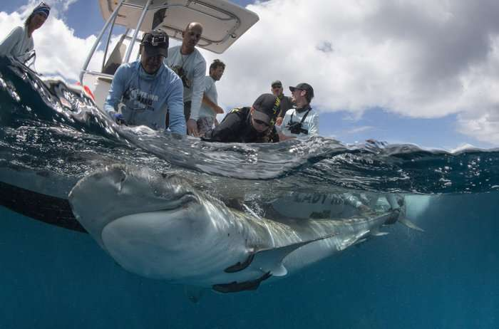 Satellite-connected tags set to boost marine conservation