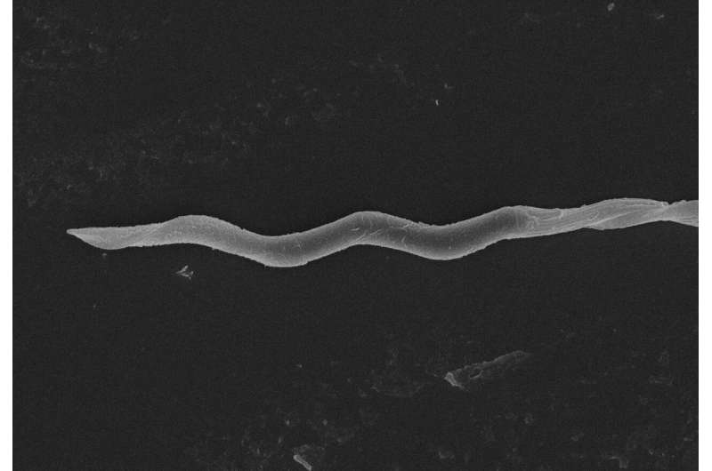 Screw-shaped bird sperm swim faster -- but it comes at a cost