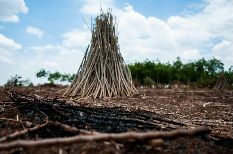 Setting the stage for cassava disease monitoring: A baseline for Vietnam and Cambodia