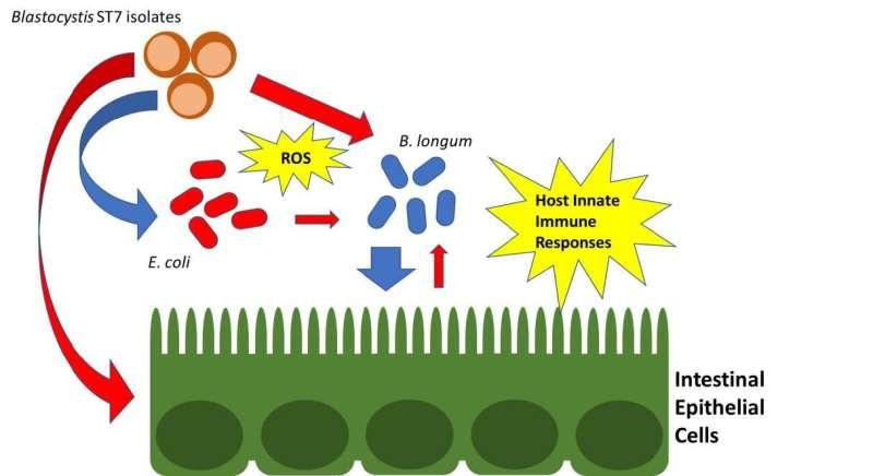 Sinister blastocystis: a clandestine killer of good bacteria revealed