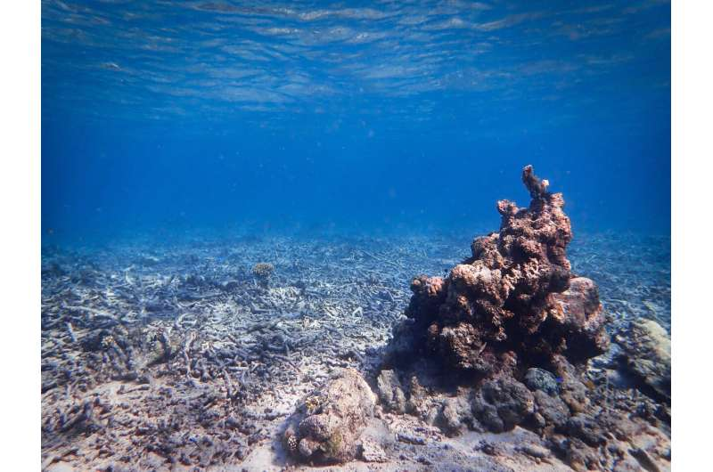Sounds of the past give new hope for coral reef restoration