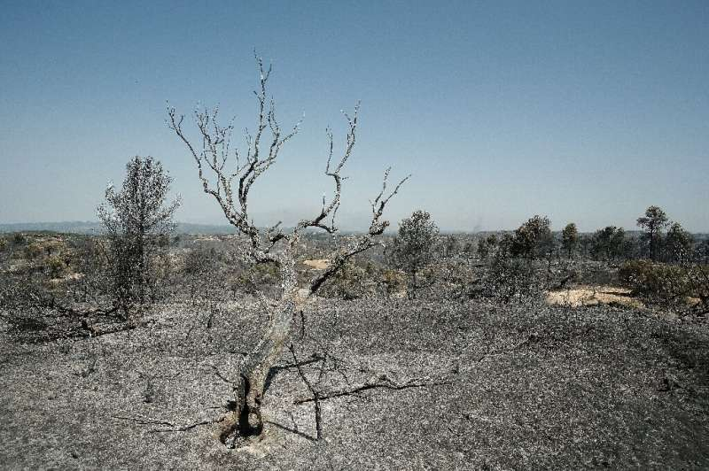 Spain's weather agency said temperatures on Saturday would exceed 36 degrees Celsius (97 degrees Fahrenheit)